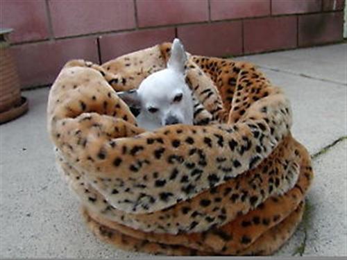 Ocelot Tiger Dreamz Trundle The 3 Way Bed